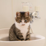 節水シャワーヘッドの実際の節水力とその他の意外な効果に大満足